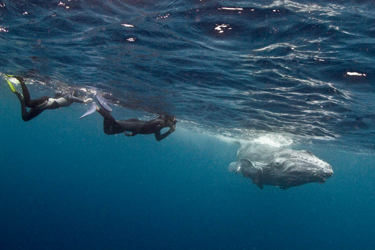 Eyre and Kiat have their first encounter with a humpback calf