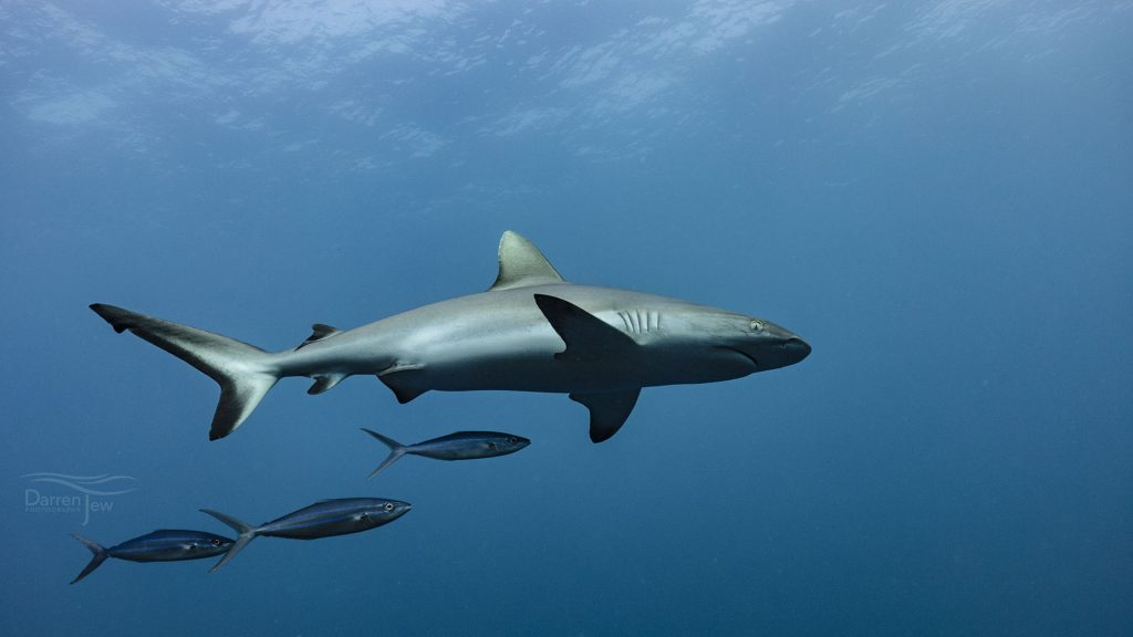 Palau Underwater © Darren Jew